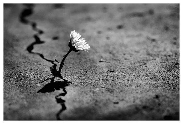 Flores nas Pedras.