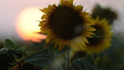 Nem Gira o Sol, Nem Gira o Mundo…Apenas Passa o Tempo!