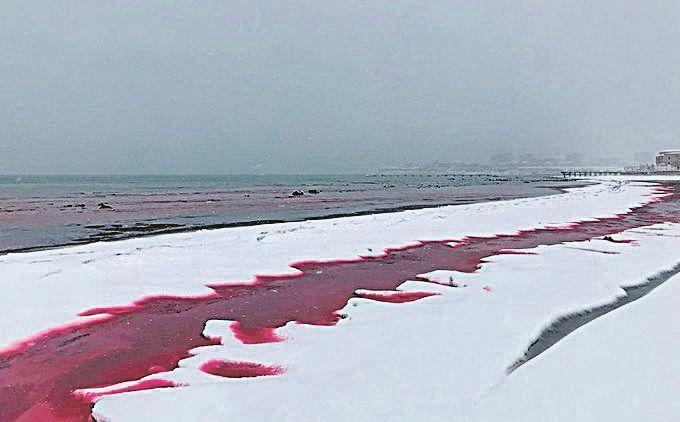 Um Mar de Sangue, de Dores e de Tristeza.